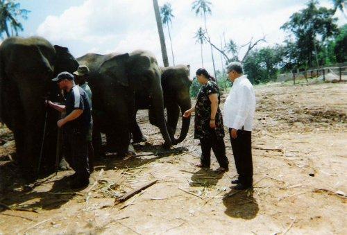 Pinnawala Elephant Sanctuary, 20 November