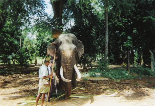 Tony meeting a blind elephant at Pinnawala Elephant Sanctuary
