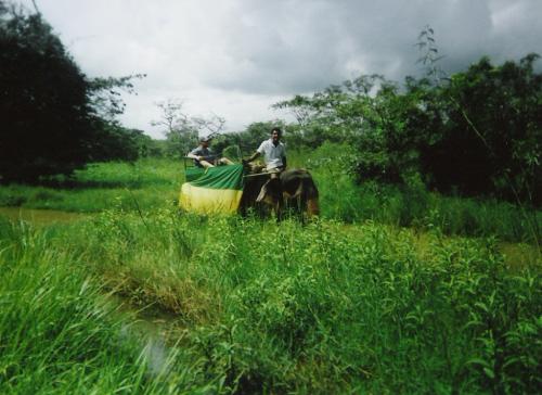 Tony riding an elephant at Habarana Elephant Ride