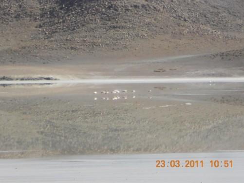 Laguna Cañapa.