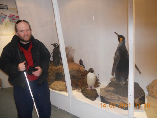 Stuffed penguins inside the museum.