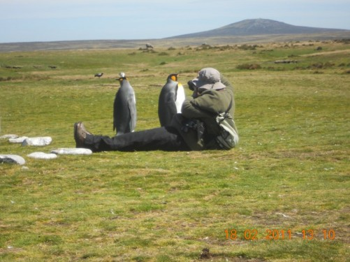 Charlotte, the guide I had in Stanley, photographing two King Penguins, possibly a couple!