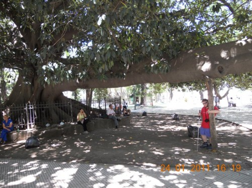 Tony under the Great Ombu tree, in Plaza San Martin, a park as well as a square.