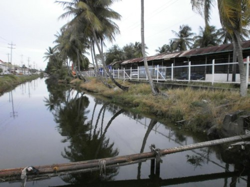 View along a canal. A road running along one side and a line of palm trees on the other.