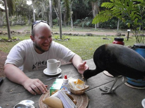 The Grey-winged Trumpeter pecking at crumbs on the table.