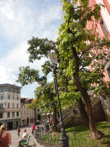 The side of Prešeren Square. Trees outside the Franciscan Church of the Annunciation.