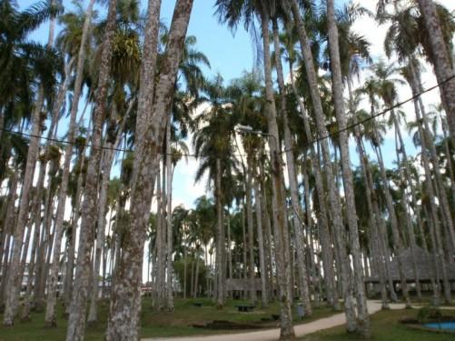 A path through the palm garden.