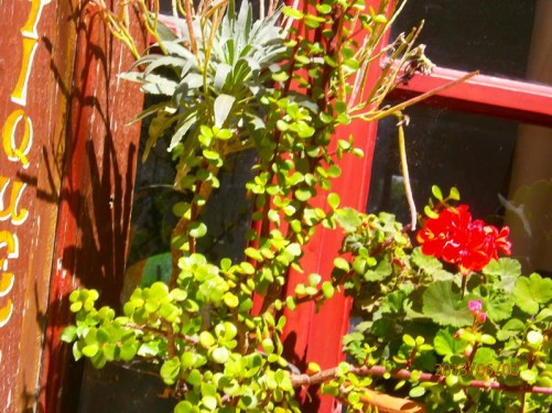 Attractive close-up of plants growing in front of the window to a house.