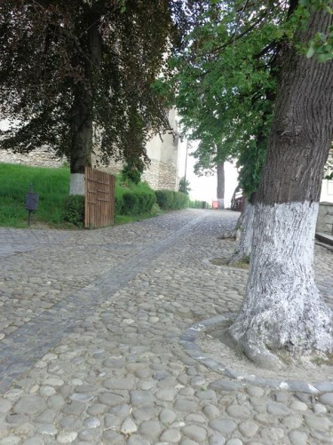 A cobblestone path under trees at the back of the Dominican Monastery Church.