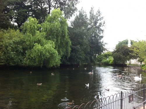 View of St James's Park Lake. Ducks and geese on the water. A wooded island in the centre of the lake.
