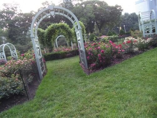 Flower beds planted with roses in a public park. This is in one of several adjoining parks east of the centre next to Lake Michigan.