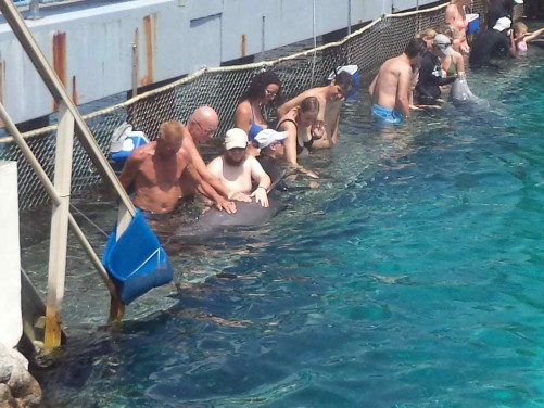 Tony with over visitors touching the dolphin's back.