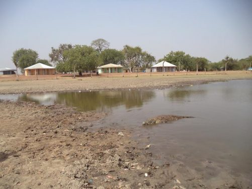 A large crocodile at Paga Sacred Crocodile Pond on the Ghana-Burkina Faso border.