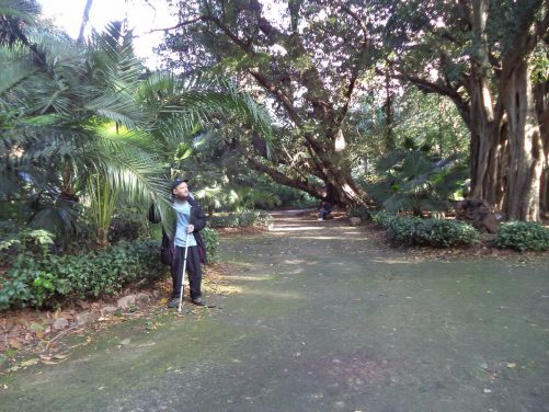 Again Tony touching palm leaves with a view along a path lined with trees and more palms in front.