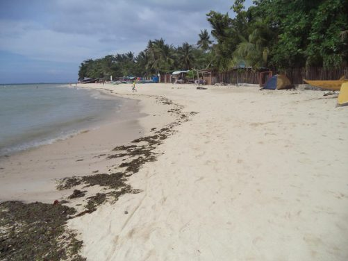 White Beach, Badian. A sandy beach backed by trees and vegetation. It is quiet with just a handful of people walking or swimming in the background.