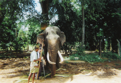Tony meeting a blind elephant at Pinnawala Elephant Sanctuary