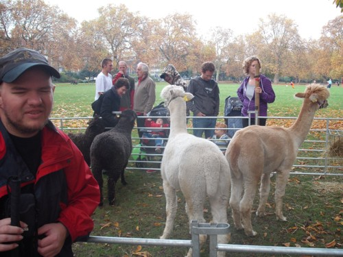 Tony and llamas at Kennington Park