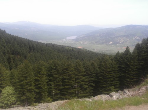 Pine forest with a valley in the distance.
