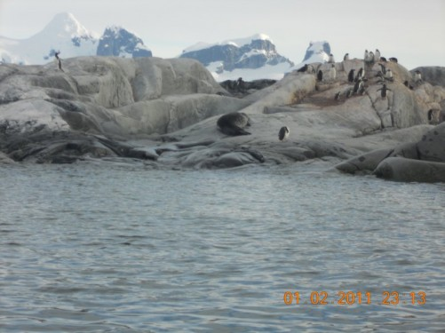 Approaching the rocky shore of Petermann Island: Gentoo penguins and a seal (probably an Antarctic Fur Seal) visible.