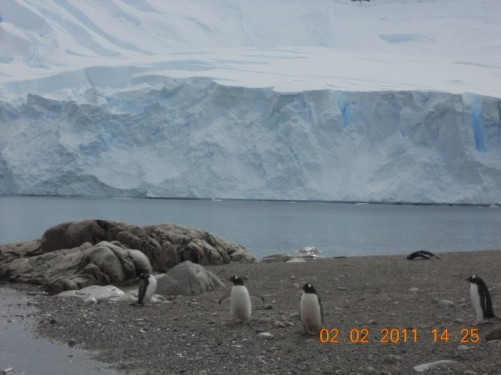 A few Gentoo penguins sitting on the beach.