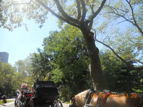 Horse and carriage rides in Central Park, one of many expensive activities available in the park.