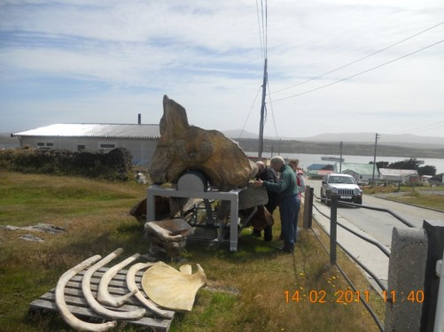 Another view of Tony touching a Sperm Whale skull.