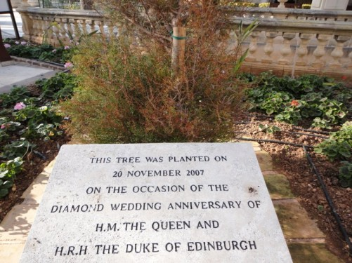 A tree planted on the occasion of Her Majesty the Queen and the Duke of Edinburgh's diamond wedding anniversary in 2007 (according to a plaque in front). Upper Barrakka Gardens.