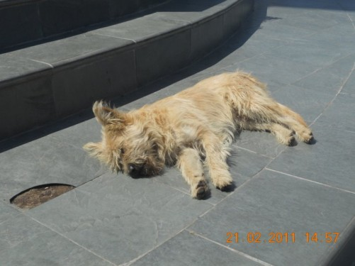A dog sleeping near the base of the Virgin Mary statue – the dog is real!