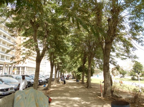 A walkway shaded by trees on the edge of Independence Square. Alongside is a road lined with tall government buildings and other offices.