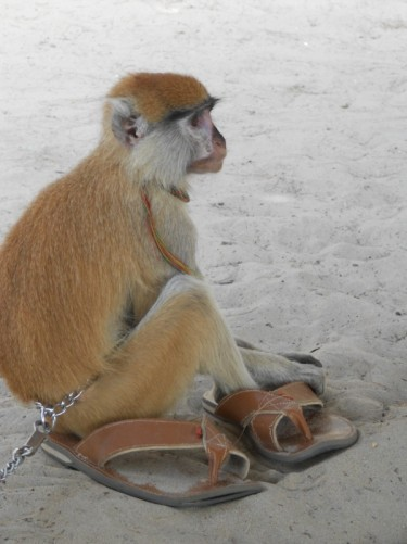 Close-up of the monkey sitting on a pair of sandals in the sand.
