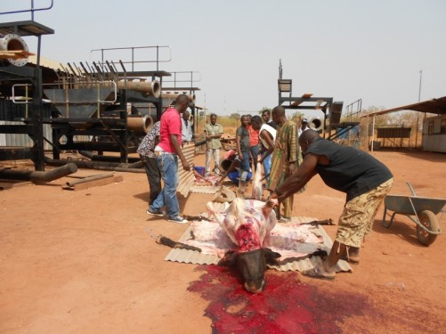 The sacrifice of a bull. A group of men skinning the bull's carcass.