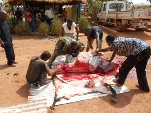 Another view of the men skinning the bull.