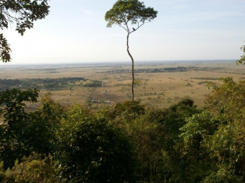 Very good view of the savannah below disappearing off into the horizon. One tall tree stands immediately in front with a bird sitting on a branch.