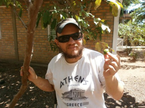 Tony holding a small lime green fruit, still attached to the tree. This is called a guinep or Spanish lime.