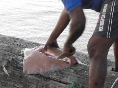 A man cutting up a flat fish on a tree trunk by the river.