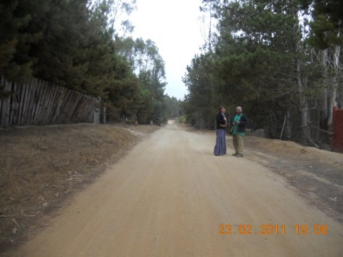 View along the unpaved sandy residential road lined with trees.