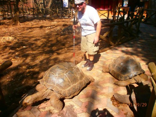 Another three giant tortoises on the path in front of Tony.
