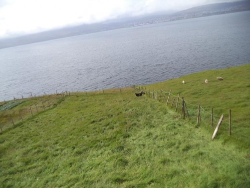 A field of long grass with sheep grazing. Another view over the sea towards Tórshavn.