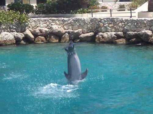 A dolphin diving down into the water.