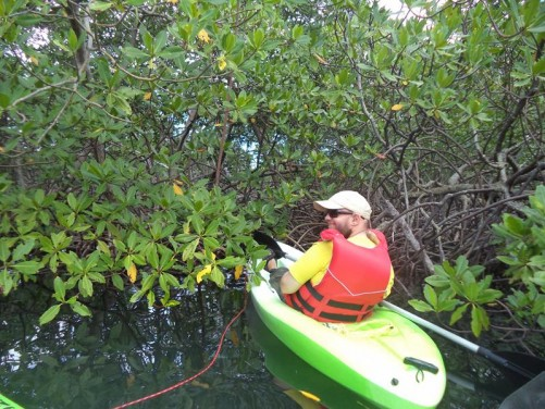 Exploring the mangroves. Tony paddling into dense woody vegetation. The mangroves are made up of low lying trees and grass, which fish and birds feed off.