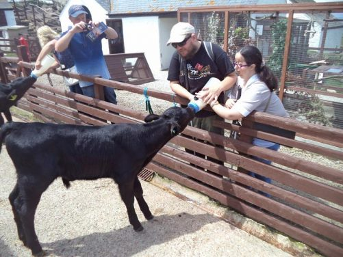 Tatiana and Tony feeding a calf using a milk-filled bottle.