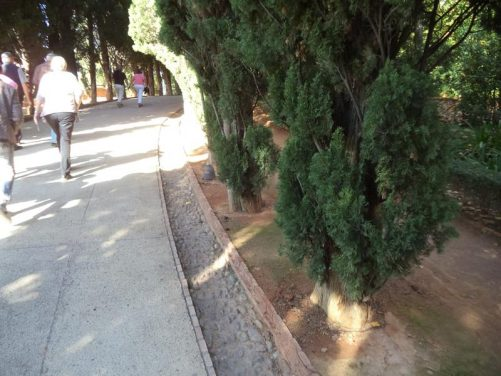 Tree-lined path near the Alhambra's main entrance.