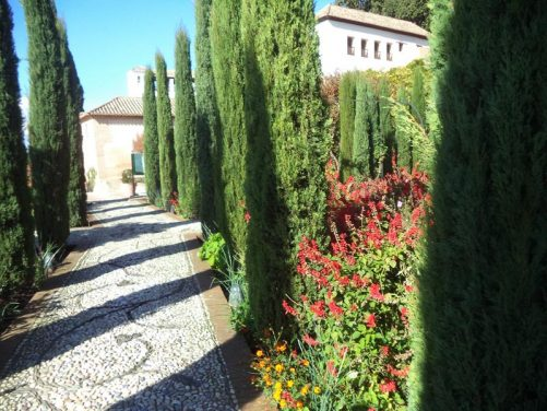 A path lined with tall narrow cypress trees. The Generalife palace in view beyond.