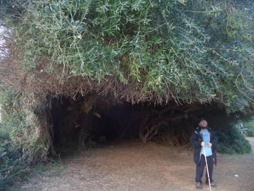 Tony standing under a shelter cut into the dense vegetation of a large bush.