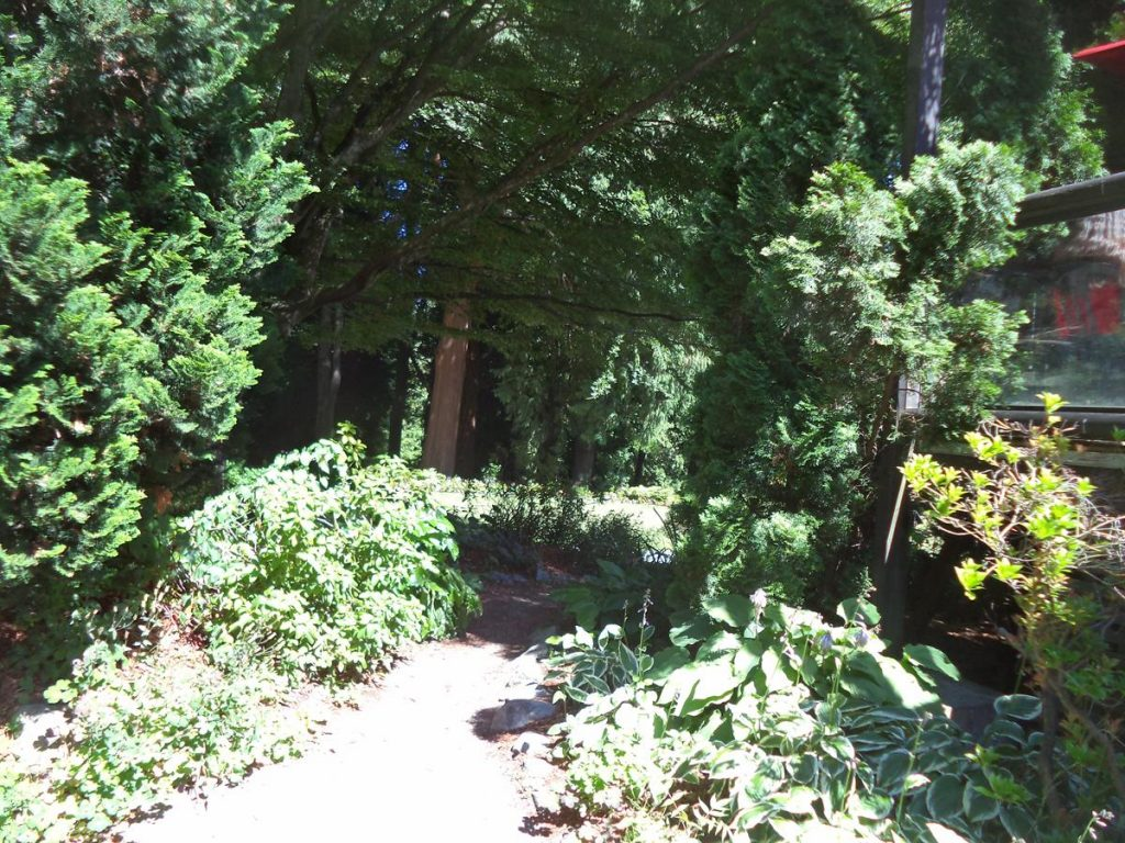 A path shaded by trees near to the café/restaurant in Stanley Park.