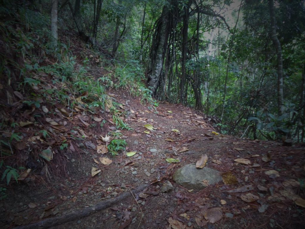 Trail through the forest. Looking at ground level showing dead leaves, roots, as well as forest floor plants and natural debris.