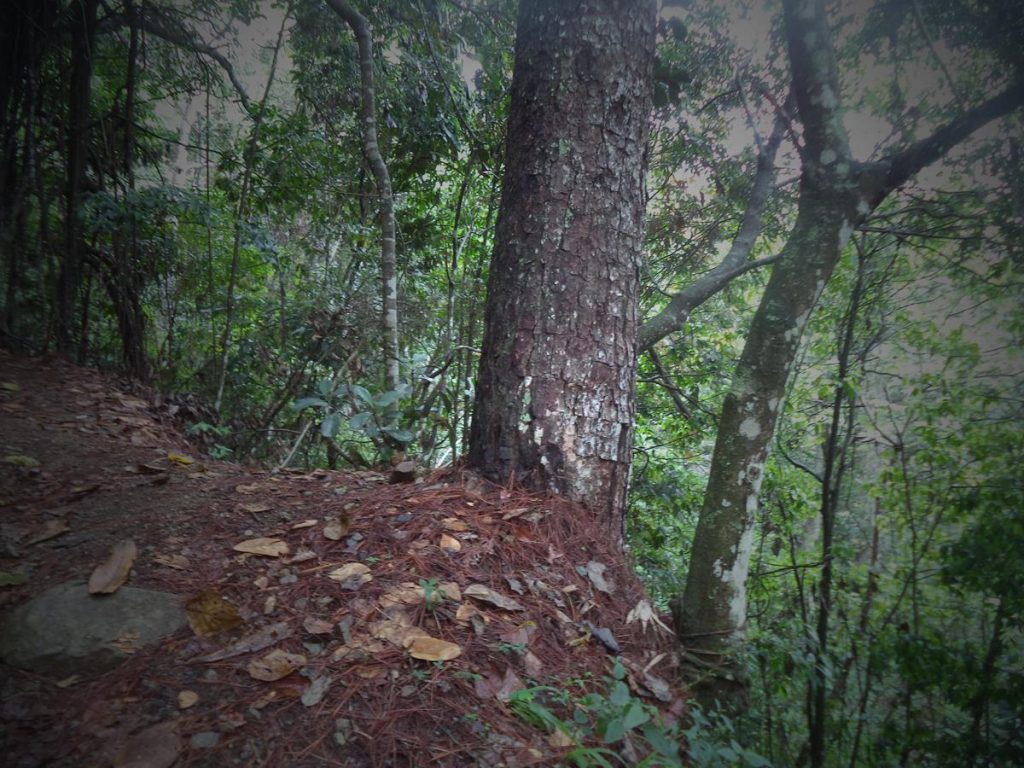 The trail passing the top of a steep slope or cliff. Trees and vegetation in view.