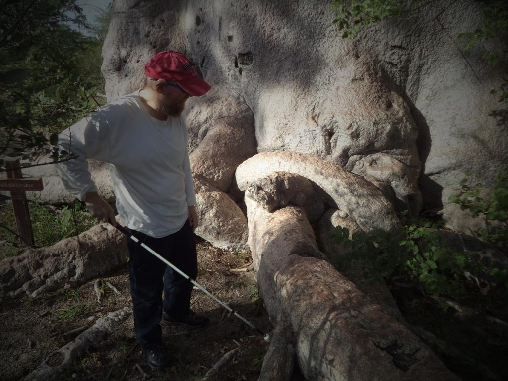 Tony examining a large root extending from the base of the baobab tree with his cane.
