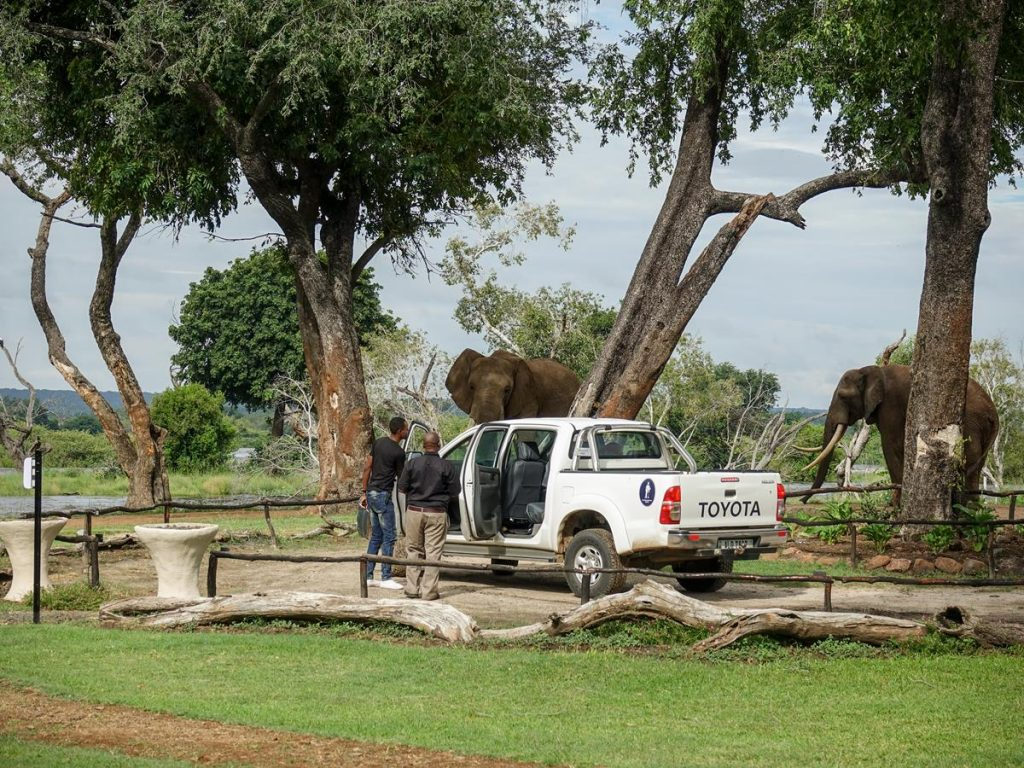 "Tony arriving in a pickup truck at Zambezi Elephant Trails for an ""Elephant Encounter"".  The site is located approximately 10km upriver from the Victoria Falls on the Zambia side . Two adult elephants can be seen roaming around in the background with the Zambezi river beyond."