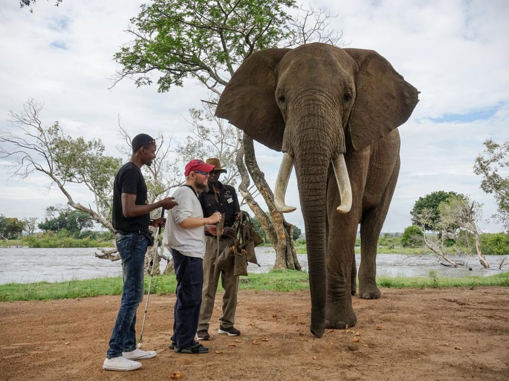 The elephant looking directly towards the camera with Tony, Ethan and the keeper to one side. This is one of five adult African Elephants at Zambezi Elephant Trails, they are named Madinda, Marula, Liwa, Danny, and Mashumbi.